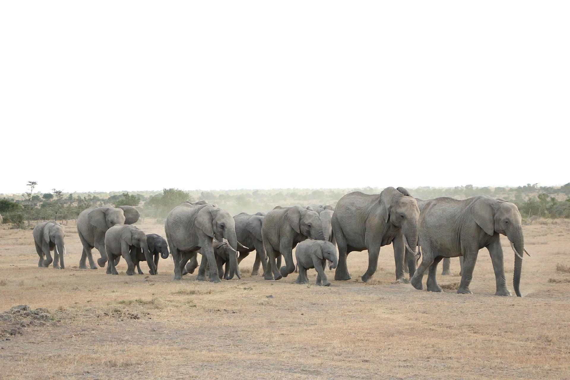 elephant-3121508
